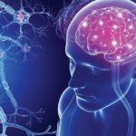Multiple Skleroz (MS) Hastalığı Nedir, MS Hastalığının Belirtileri ve Tanısı